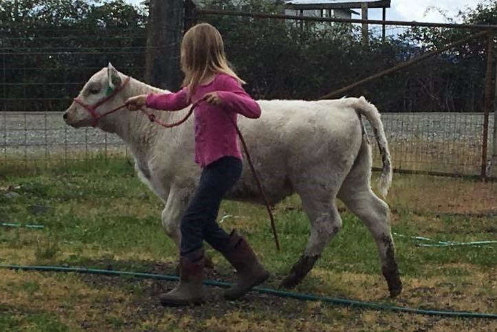 Renee (8 years) halter lesson with Firefly (4 months old)